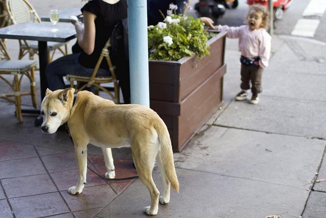 dog_kids_kozi.jpg