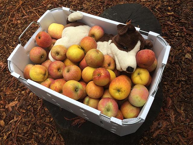 apples-seb.jpg