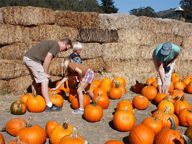 arata-pumpkin.jpg