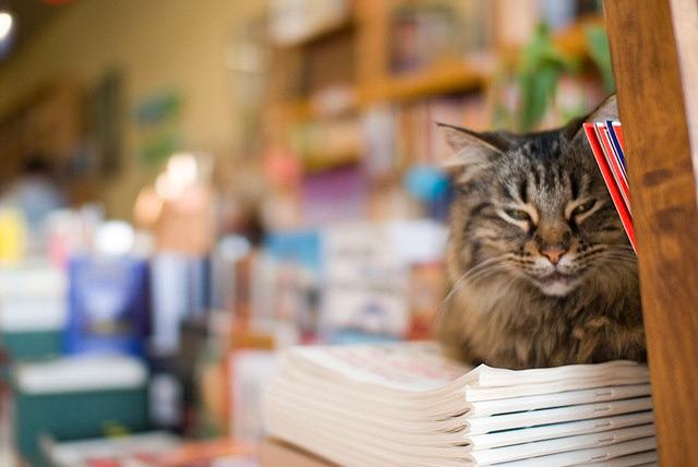 bookstore-cat.jpg