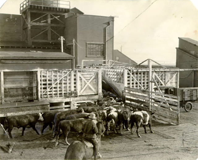 How Cow Hollow And Dogpatch Got Their Names, And More Fun