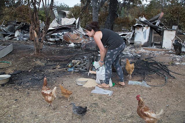 chickens-valley-fire.jpg
