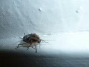 hotel-europa-bed-bugs-2.jpg