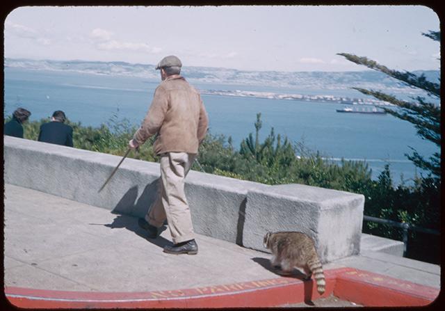 man-pet-raccoon-0.jpg