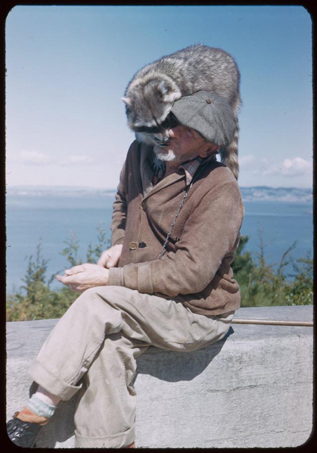 man-pet-raccoon-2.jpg