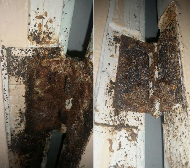 market-st-bedbugs.jpg