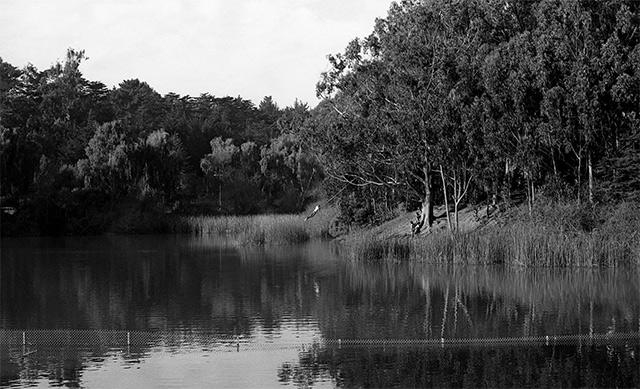 mountain-lake-swing-3.jpg