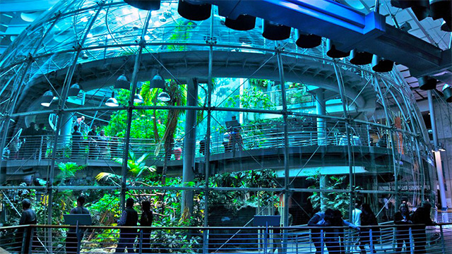 sciences-rainforest.jpg