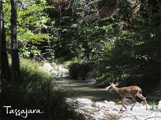 tassajara-creek.jpg