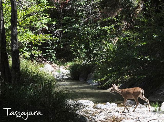 tassajara-creek.jpg