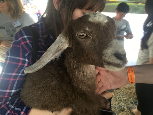 Goats10.jpg