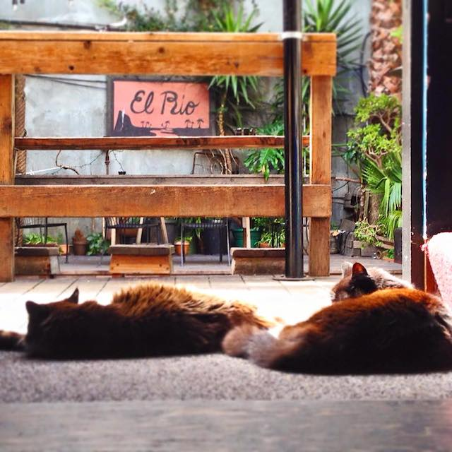 elriocats.jpg