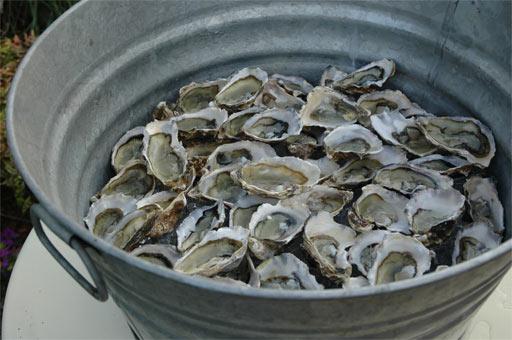Bucket o' Oysters