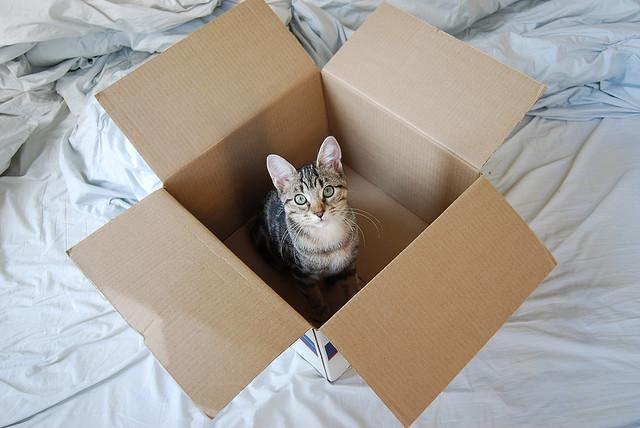 cat_box.jpg