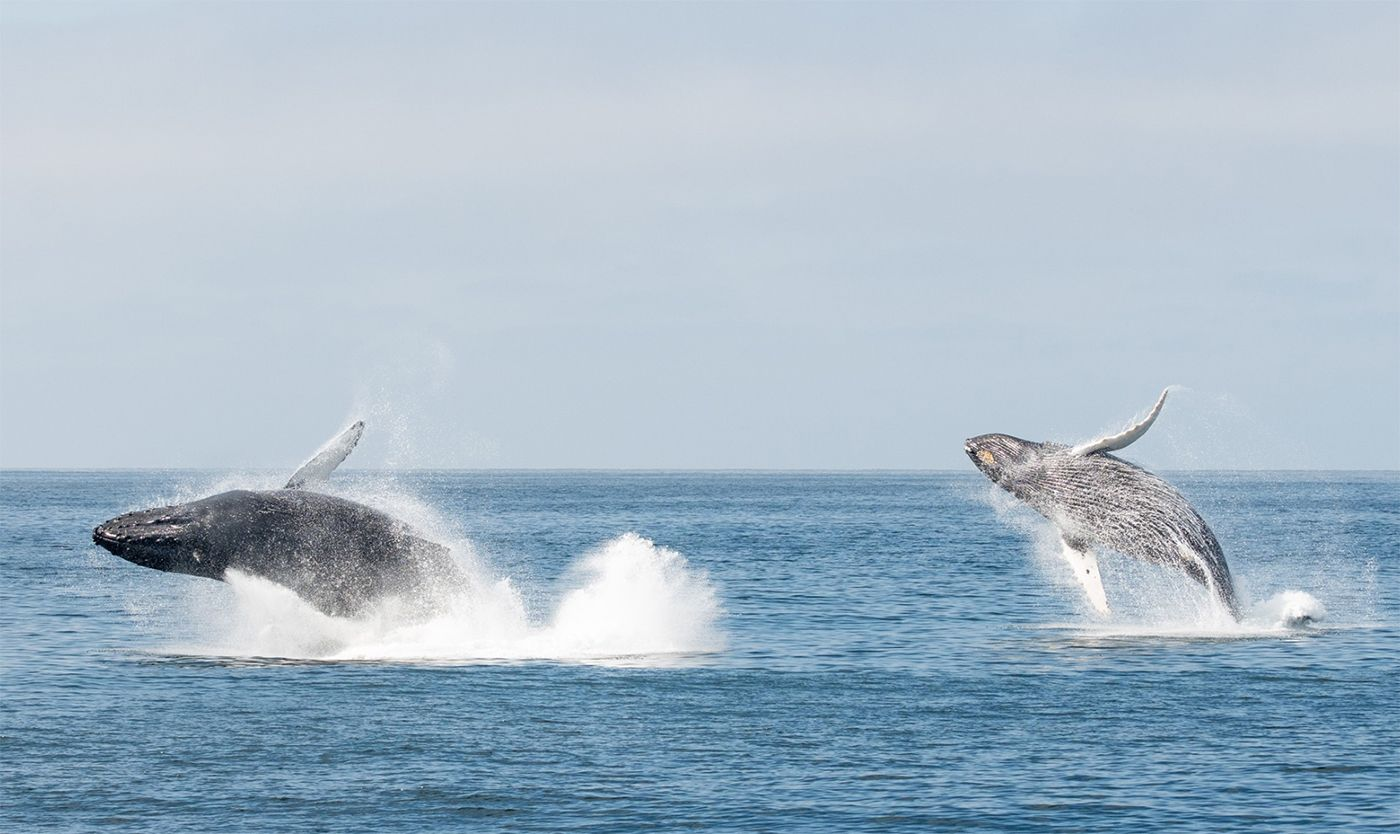 Multiple Whales Were Breaching Wildly In Monterey Bay Right After Tuesday Earthquake