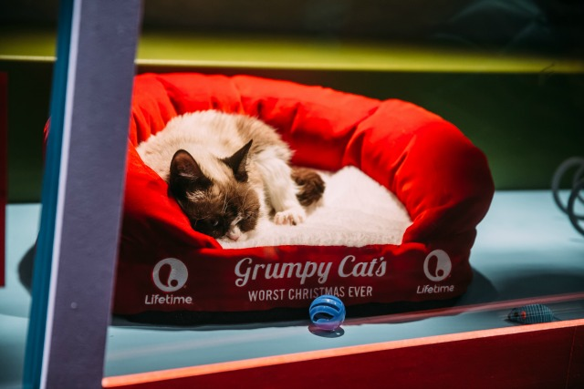 Photos: Adoptable Animals In Union Square Macy's Confound With Cuteness