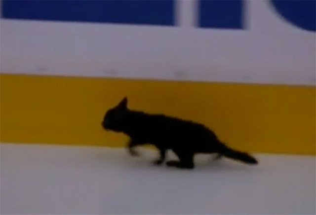 Watch A Stray Cat Slip And Slide On The Ice Before Sharks Game In San Jose