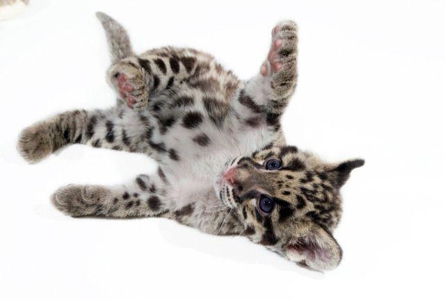 2010_0505_leopard3.2.jpg