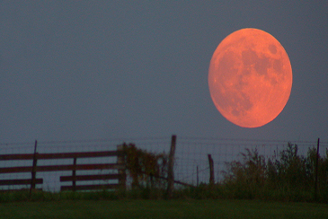Harvest Moon Visible Tonight