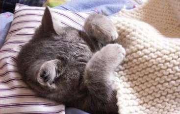 sick cat swine flu - Cuidados com o gato com diagnóstico de Doença Renal Crônica (DRC)