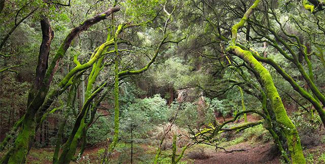 french-trail-redwood.jpg