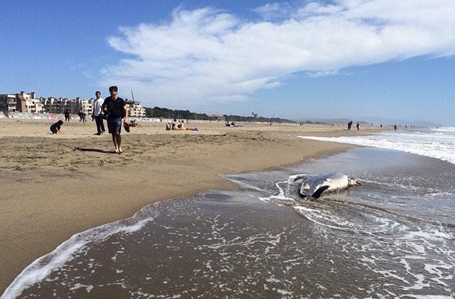 mammal-beaching-4.jpg