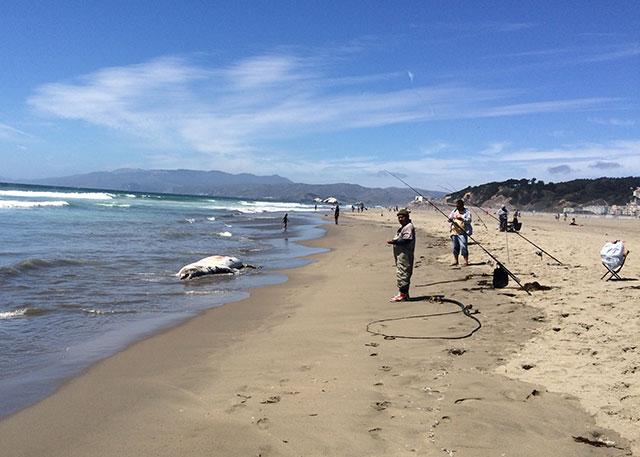 mammal-beaching-5.jpg