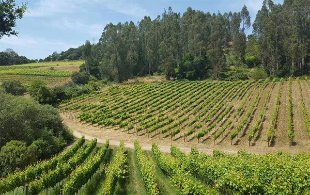 santa-cruz-wine.jpg