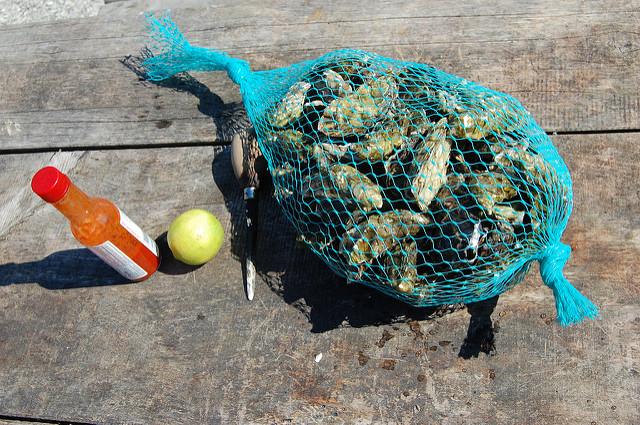 oysters_tb.jpg